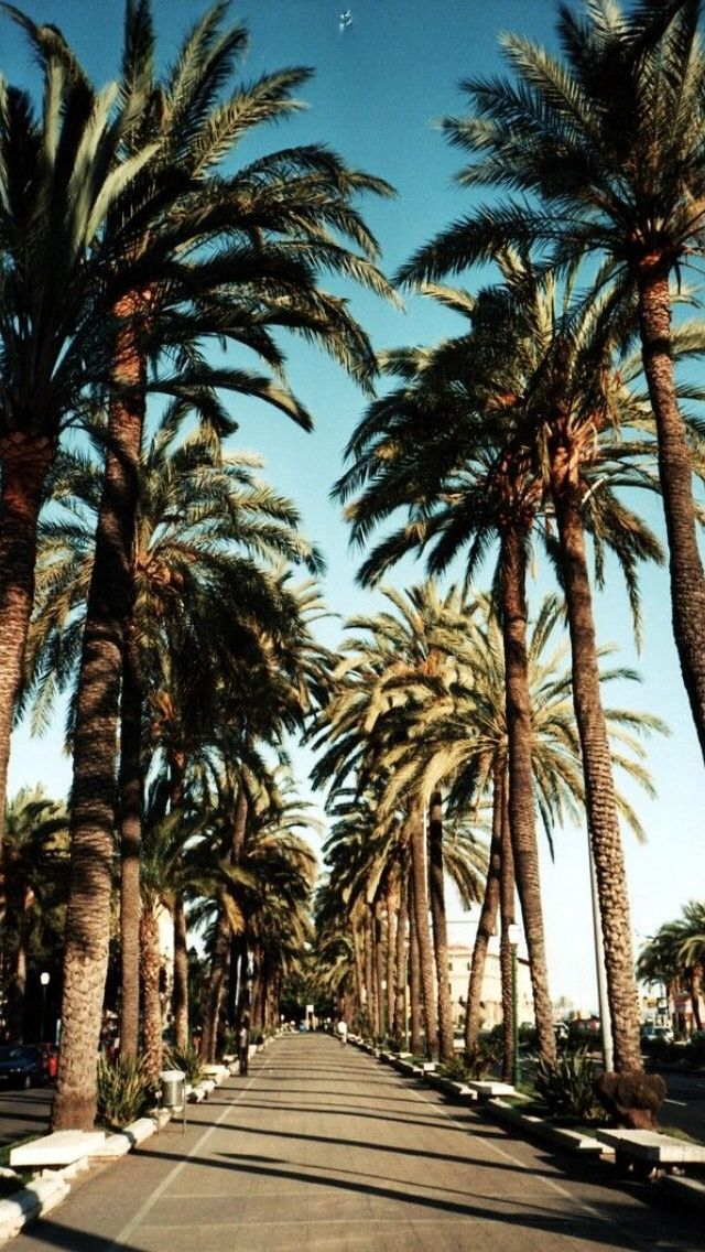 Beautiful Palm Trees Iphone Wallpapers Wallpapersafari
