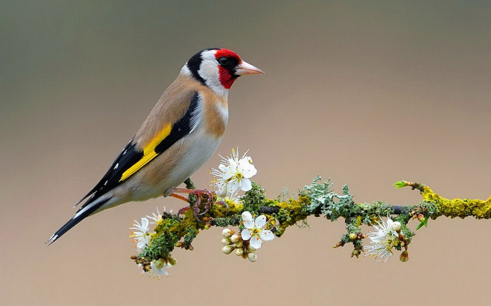 flowers for flower lovers Flowers and birds desktop wallpapers 1600x1000