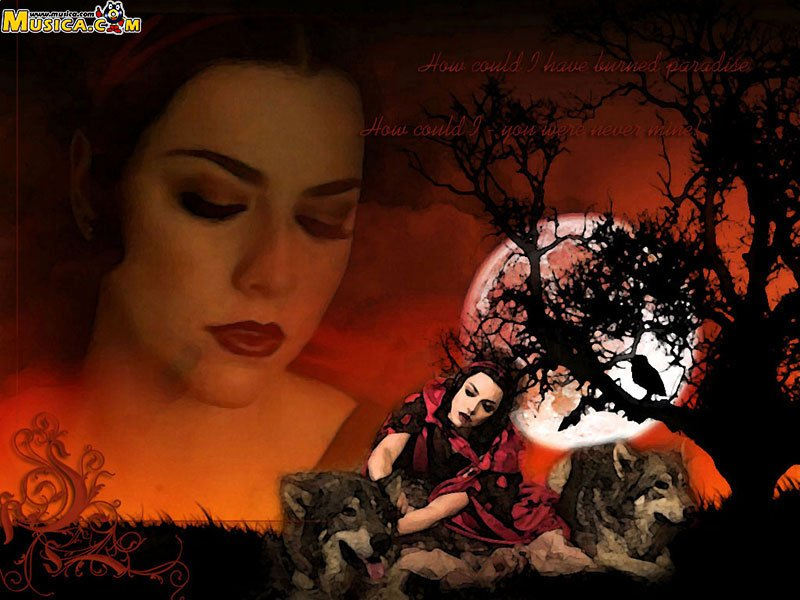 Amy Lee   Evanescence Wallpaper 30425654 800x600