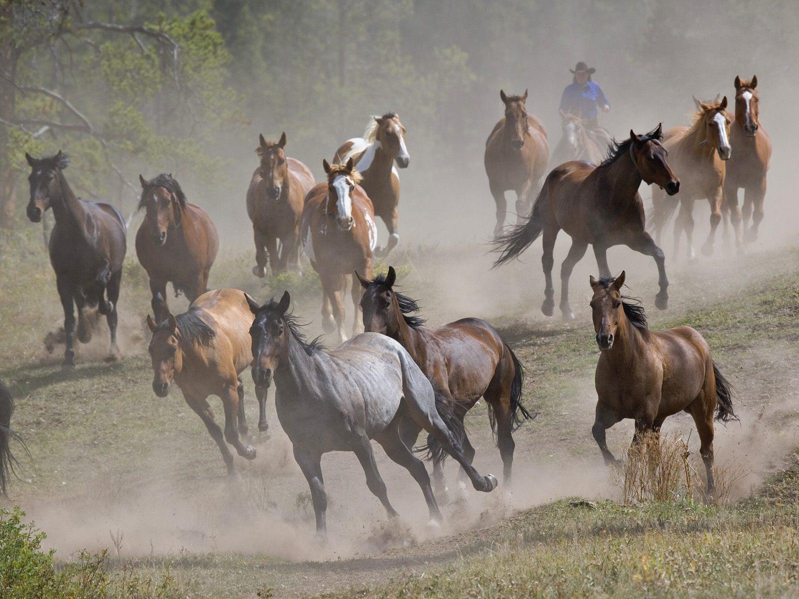 The Cat Running Horses Wallpapers for Desktop Backgrounds 1600x1200