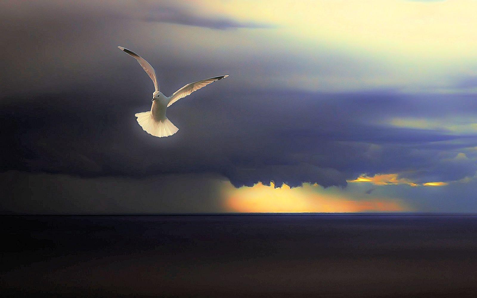 Apple iMac 215   Hope Beautiful Sunset Sky Clouds Seagull Bird 1600x1000