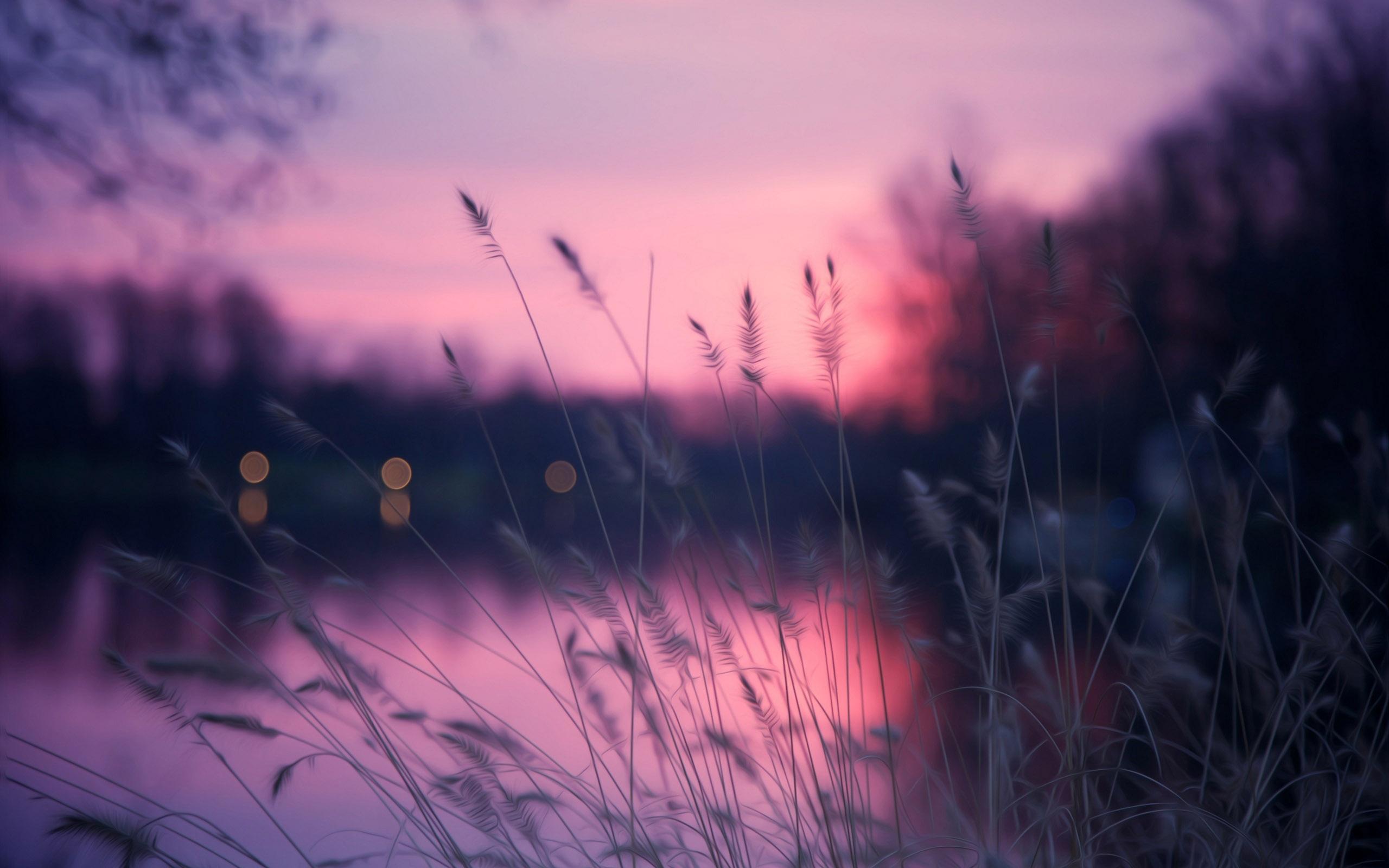 закат трава цветы озеро  № 1025213 без смс