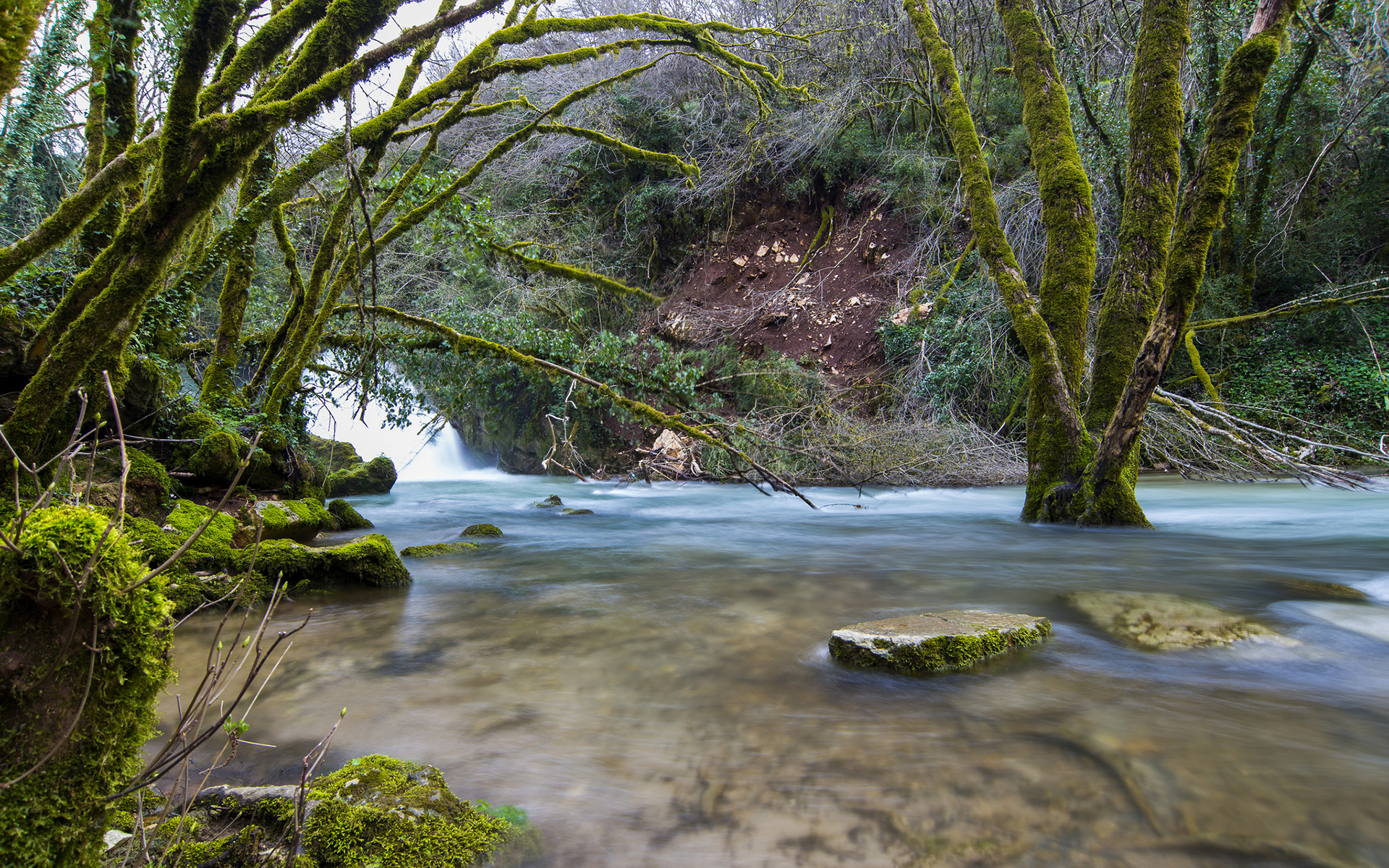 River Trees Moss Forest Rocks Stones wallpaper background 1920x1200
