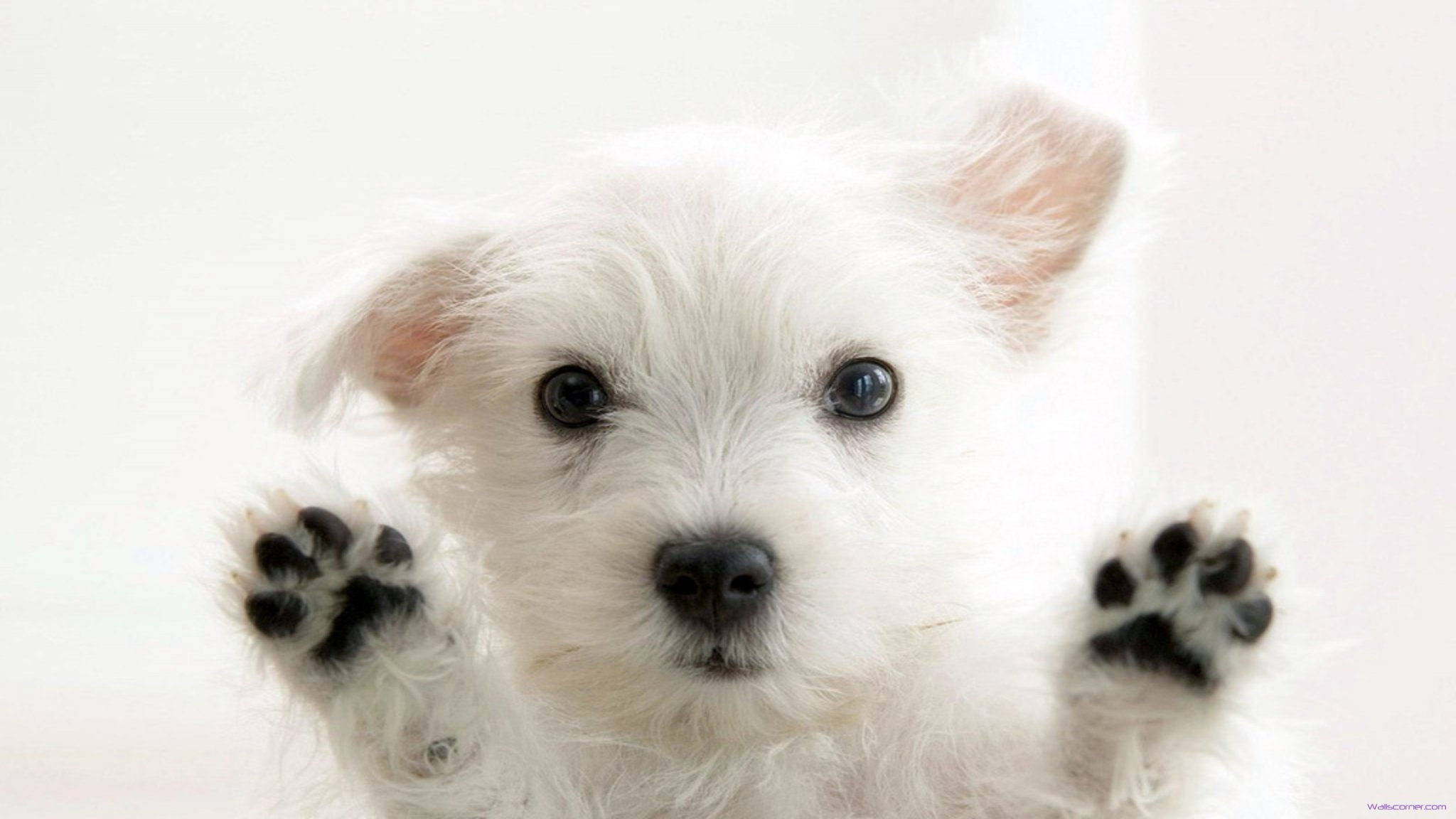 of cute white puppy beauty cute white puppy hd wallpaper wallpaper 2048x1152