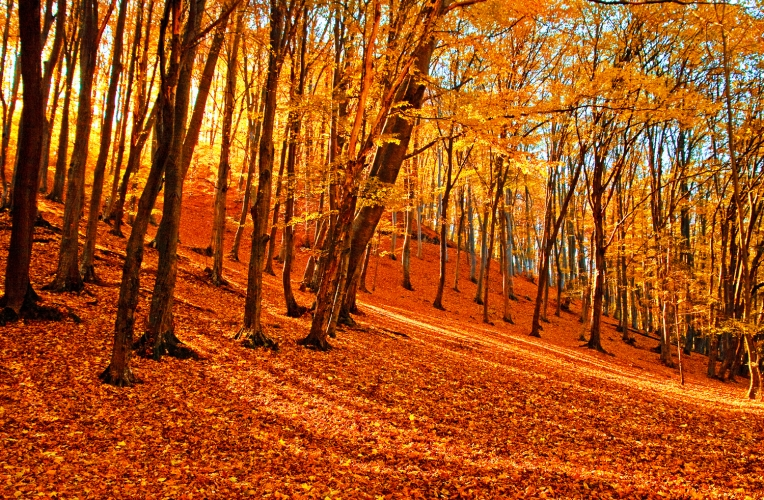 Autumn Forest Wallpaper Wall Mural MuralsWallpapercouk 764x500