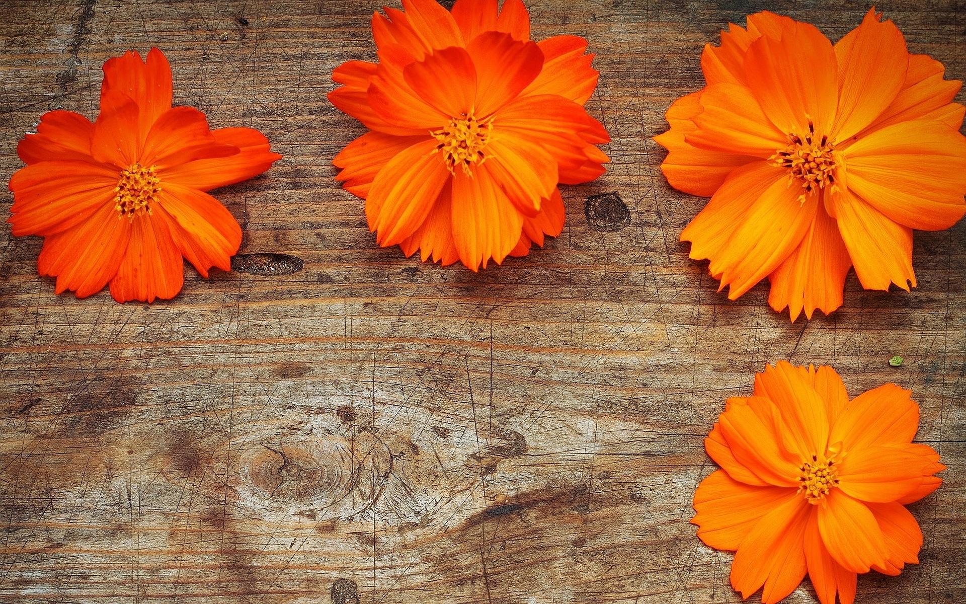 Orange Flowers Wood Wallpaper HD Wallpaper Girls 429 1920x1200
