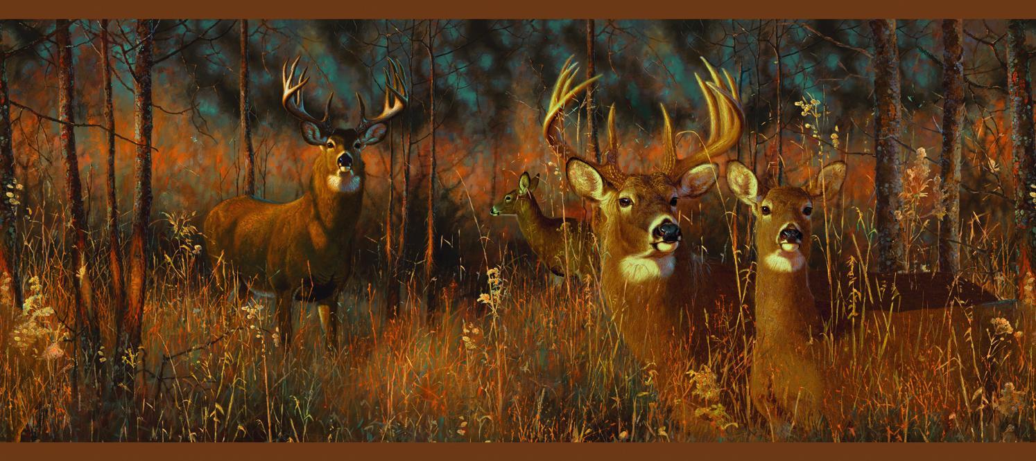 Wallpaper Borders Discount Deer Near A Cabin