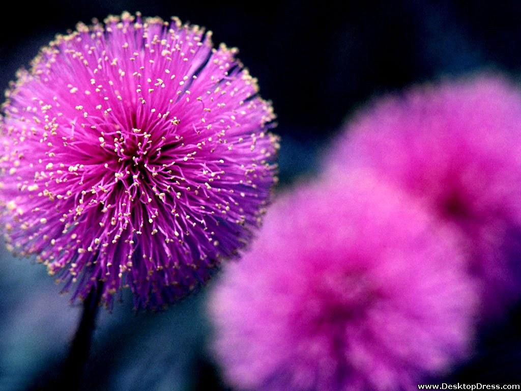 free purple flower wallpaper  wallpapersafari, Beautiful flower