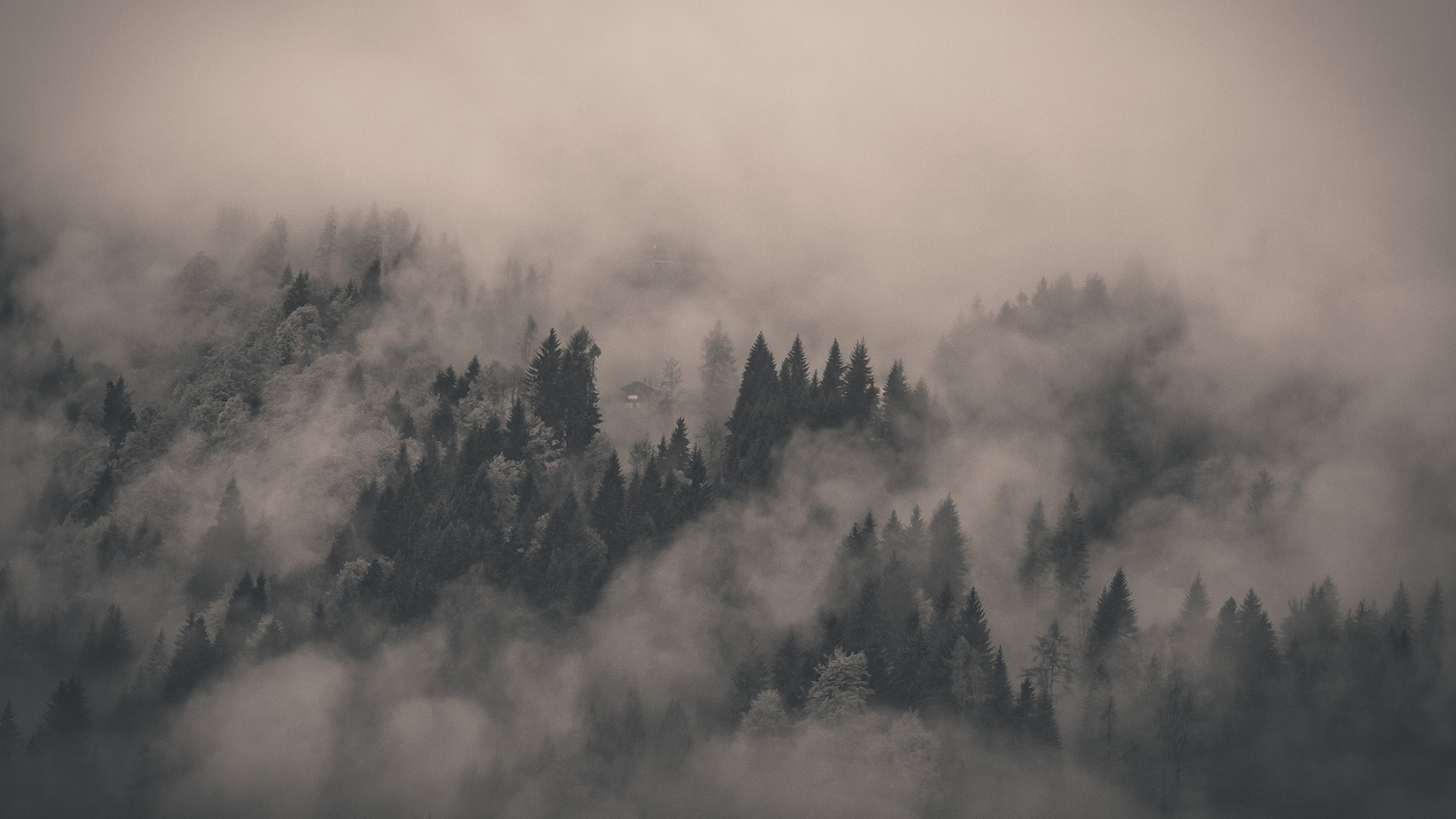 Fog Forest Nature Background For Wallpaper 640 9331 Wallpaper Cool 1920x1080