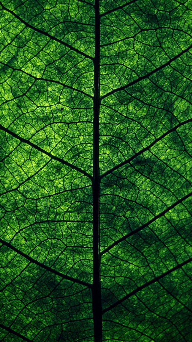 Green Leaf Perspective Wallpaper   iPhone Wallpapers 640x1136