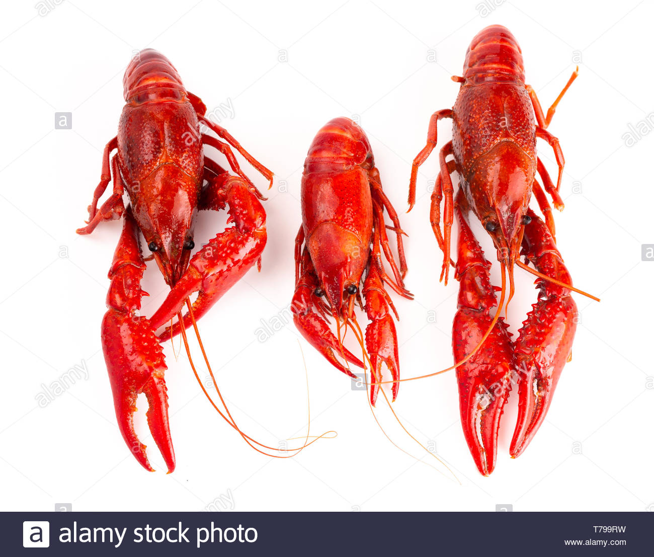 Cooked Red Crawfish Isolated on a White Background Stock Photo 1300x1107