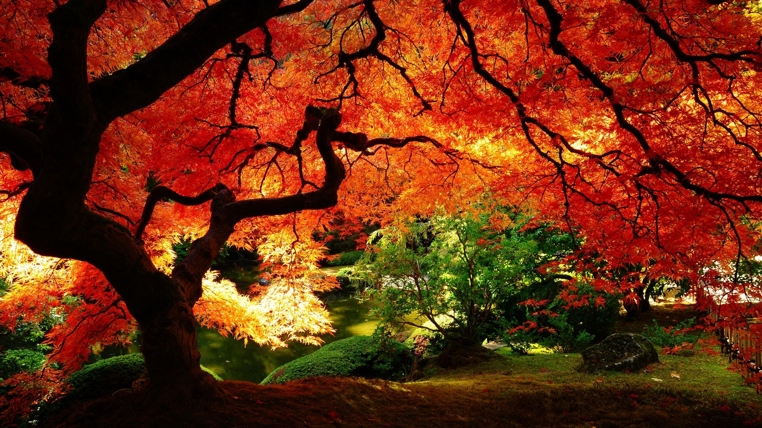 japonais rouge wallpaper hd japanese garden trees autumn 2560x1440 2560x1440