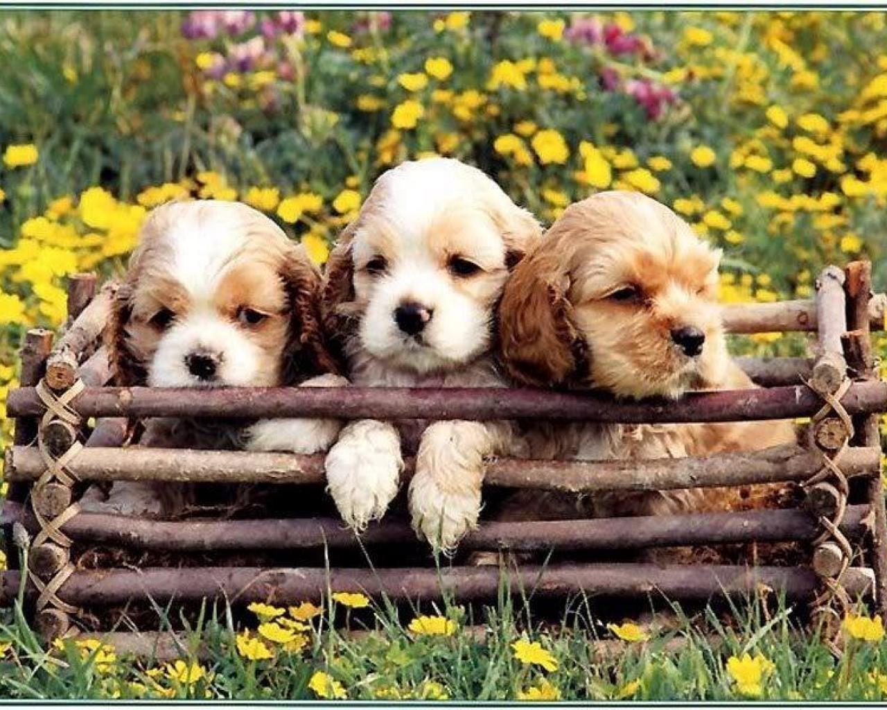 Puppies In Flowers Computer Wallpaper