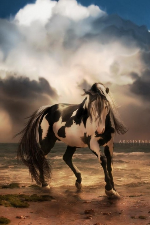 42 Horse Wallpaper For Iphone On Wallpapersafari