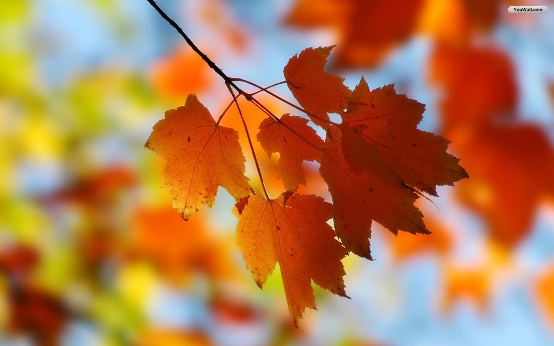 group of leaf fall screensaver