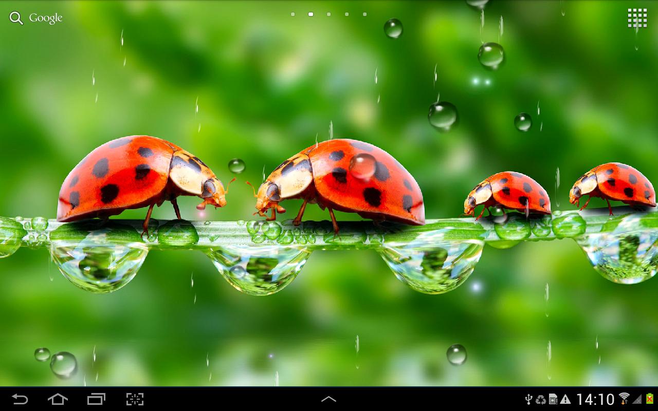 Rain Live Wallpaper 1280x800