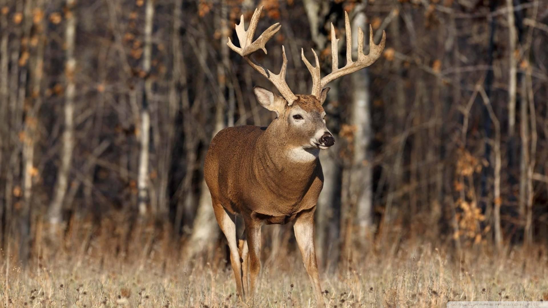 1920x1080 577005 kb brave big deer source keys picture pictures 1920x1080