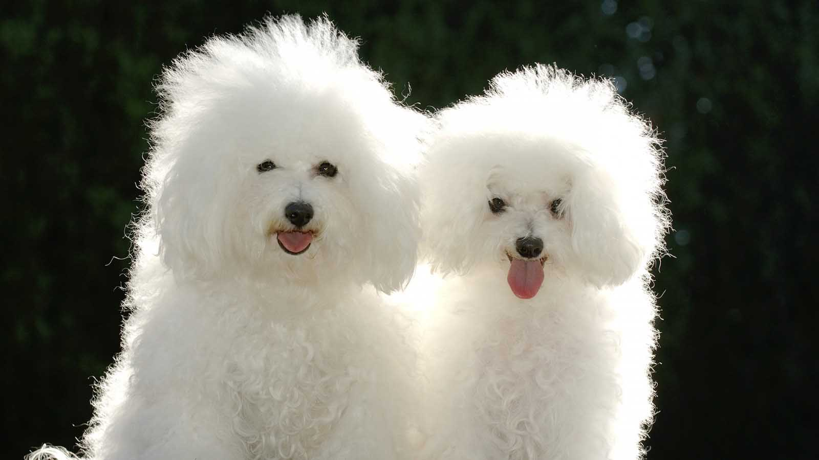 Cute Puppy Couple Wallpapers Unique HD Wallpapers 1600x900