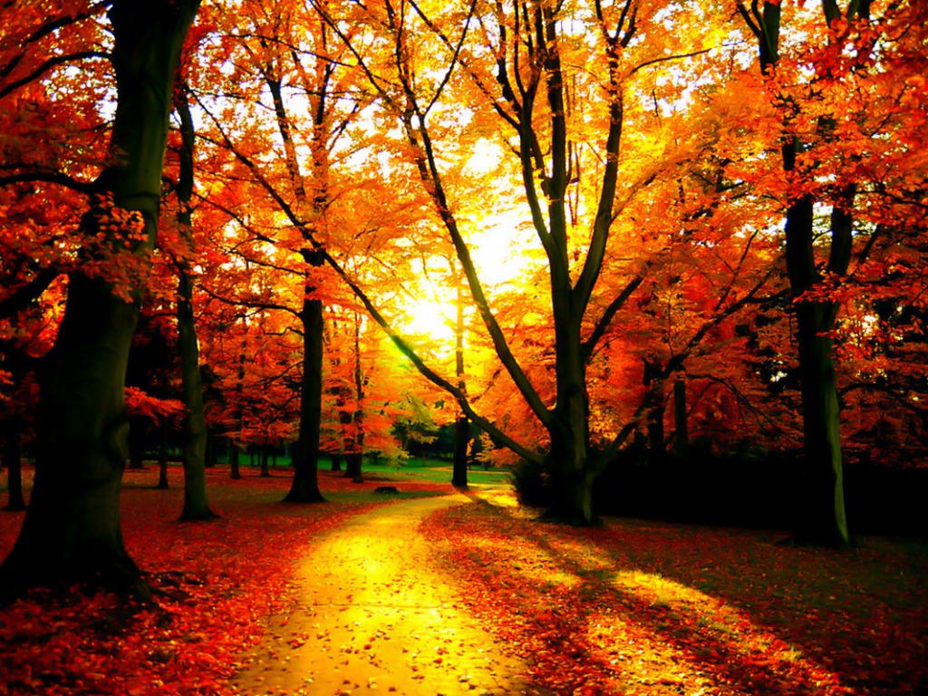 Autumn Tree Wallpaper 61 Images: Free Early Fall Desktop Wallpapers