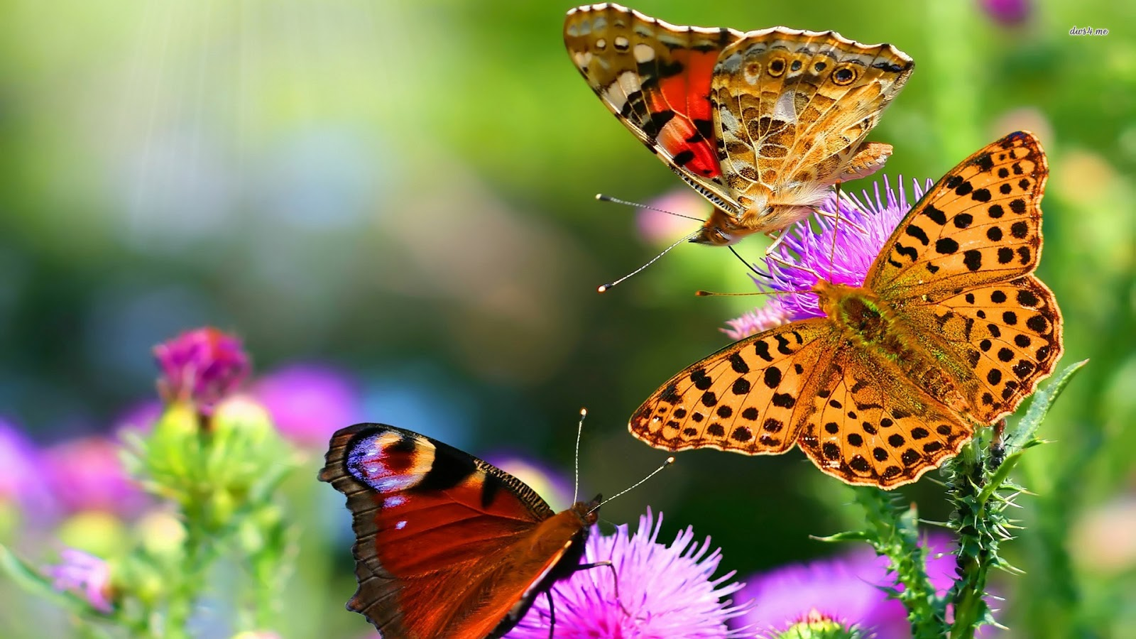 Wallpapers Butterflies to Download 1600x900