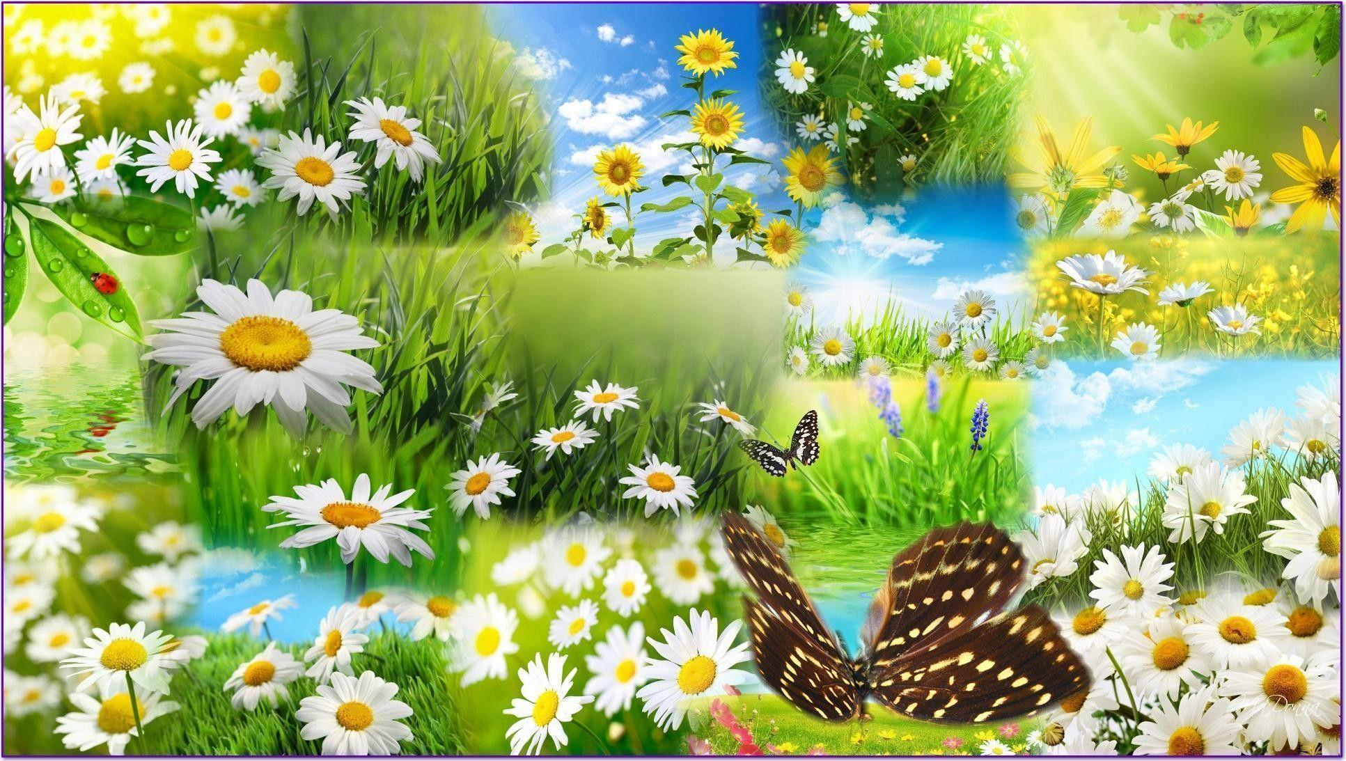 Spring Flower Desktop Backgrounds 1933x1093