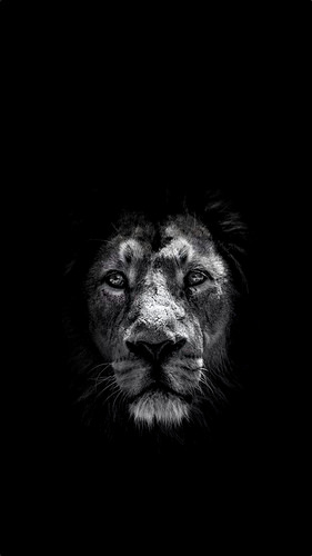 iphone 6 Plus Lion Wallpaper Flickr   Photo Sharing 281x500