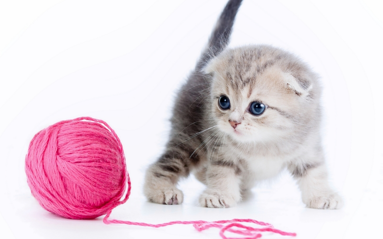 cute cat Mac Wallpaper Download Mac Wallpapers Download 1280x800