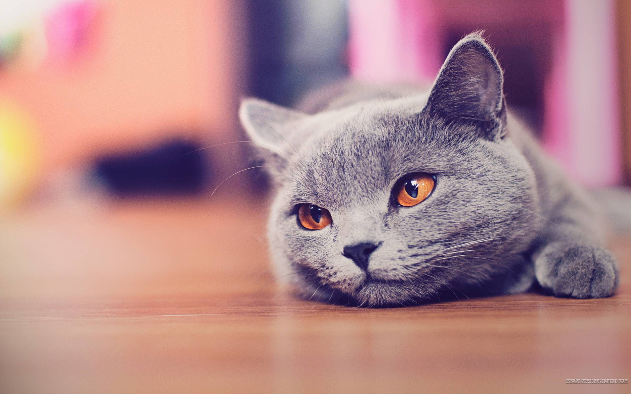 Funny Cat Desktop Wallpapers 2560x1600
