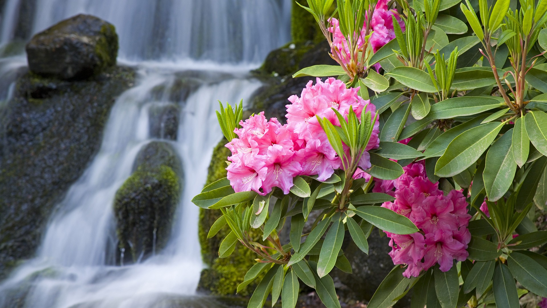 1920x1080 Spring Flowers and Waterfall desktop PC and Mac wallpaper 1920x1080