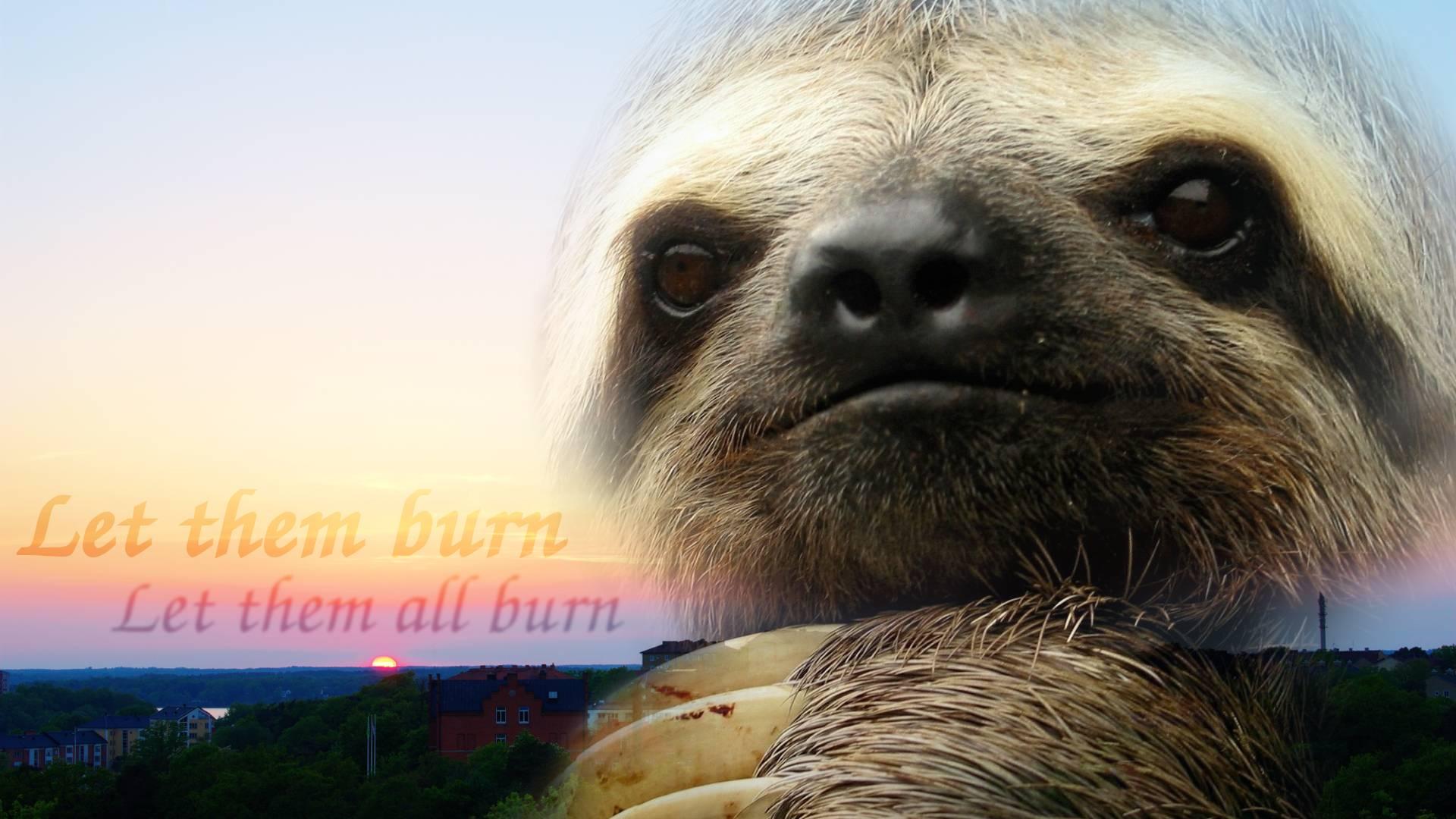 Yawning baby sloth