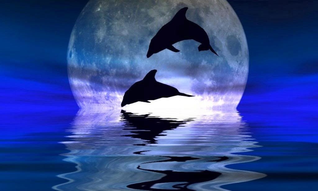 Dolphin Tonight Pictures Desktop Wallpaper Dolphins Pictures 1024x614