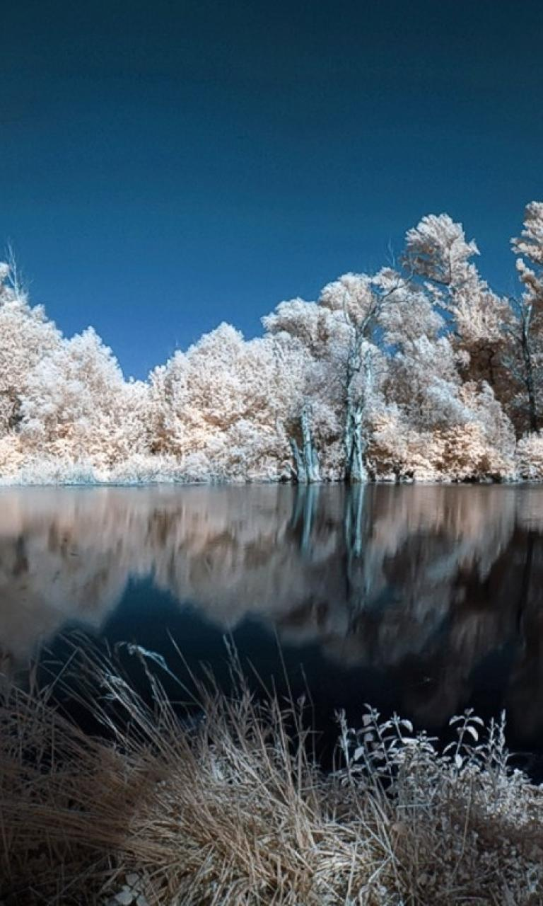 Water landscapes nature winter trees white lakes wallpaper 73351 768x1280