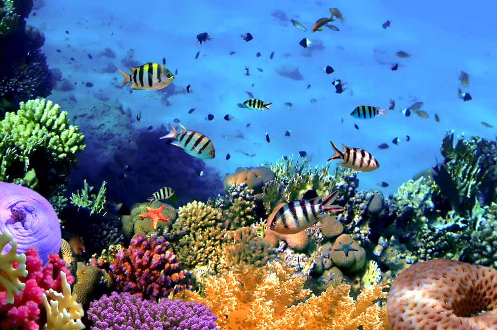 Coral Reef Top Koh Cahg Island Thailand Wall Mural ohpopsi 1000x665