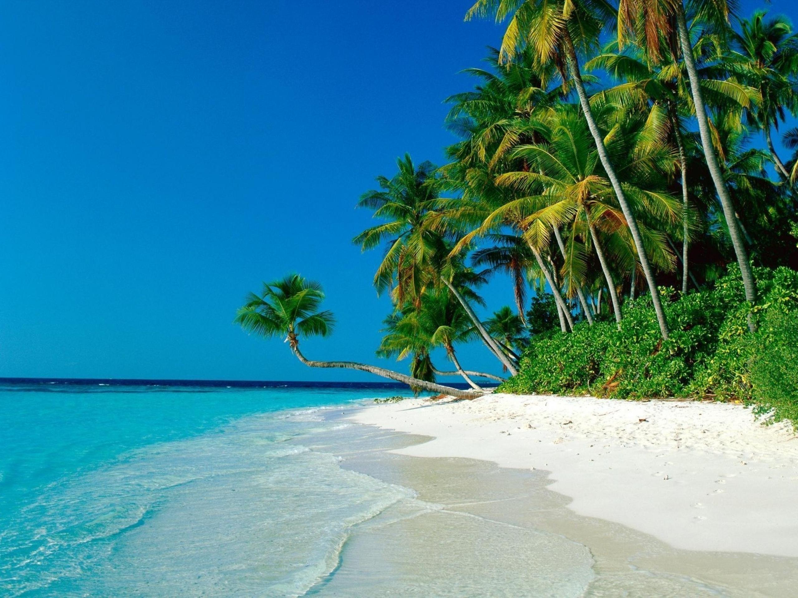 Ocean Palm Trees Shore Beach wallpapers Ocean Palm Trees Shore Beach 2560x1920
