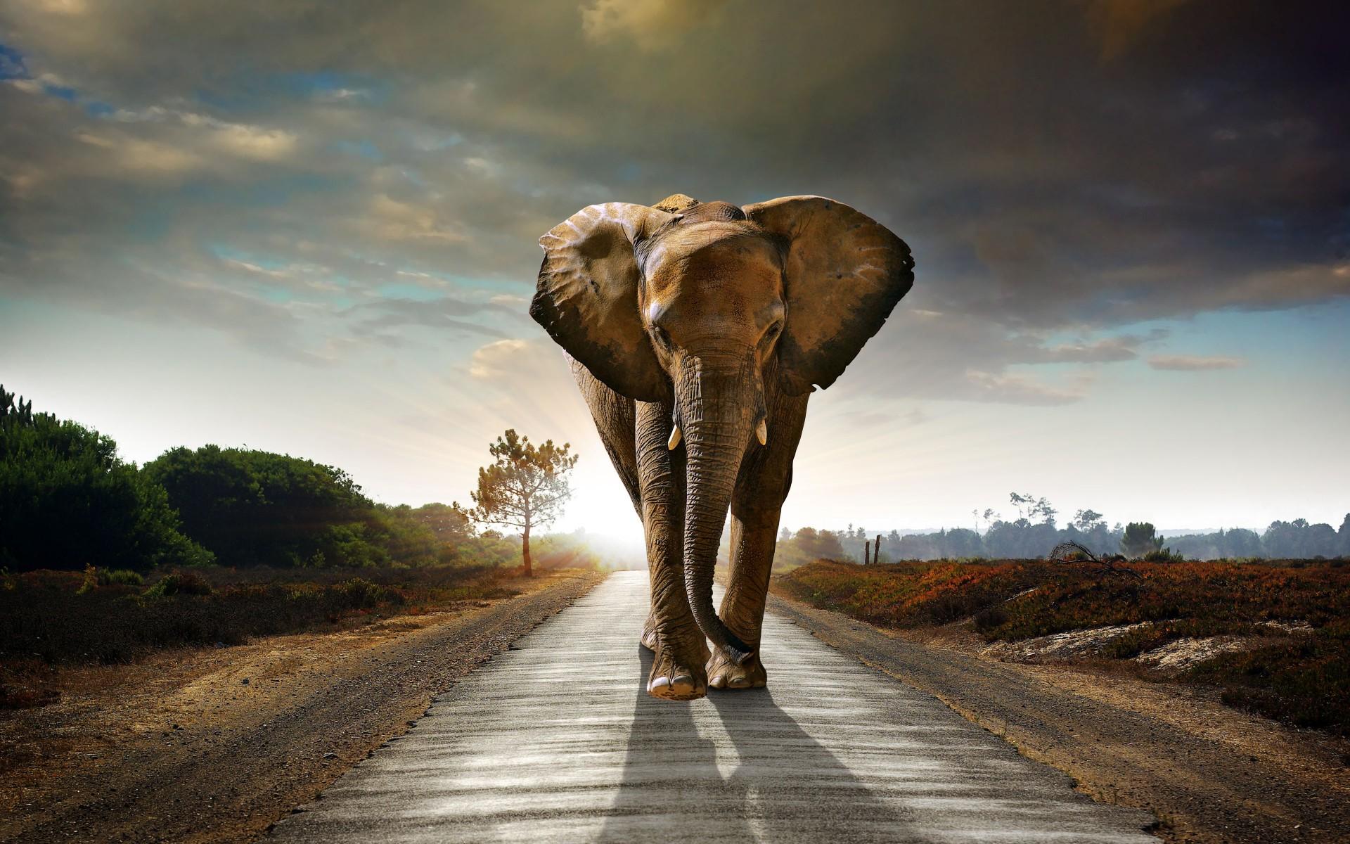 72 ] Elephant Desktop Backgrounds On WallpaperSafari