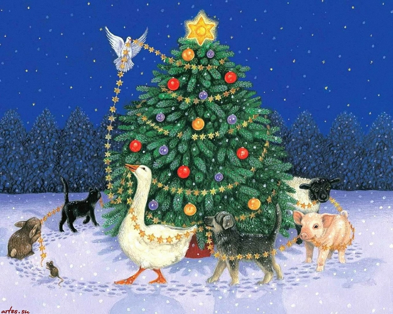 animals bird animal christmas Animals Other HD Desktop Wallpaper 800x640