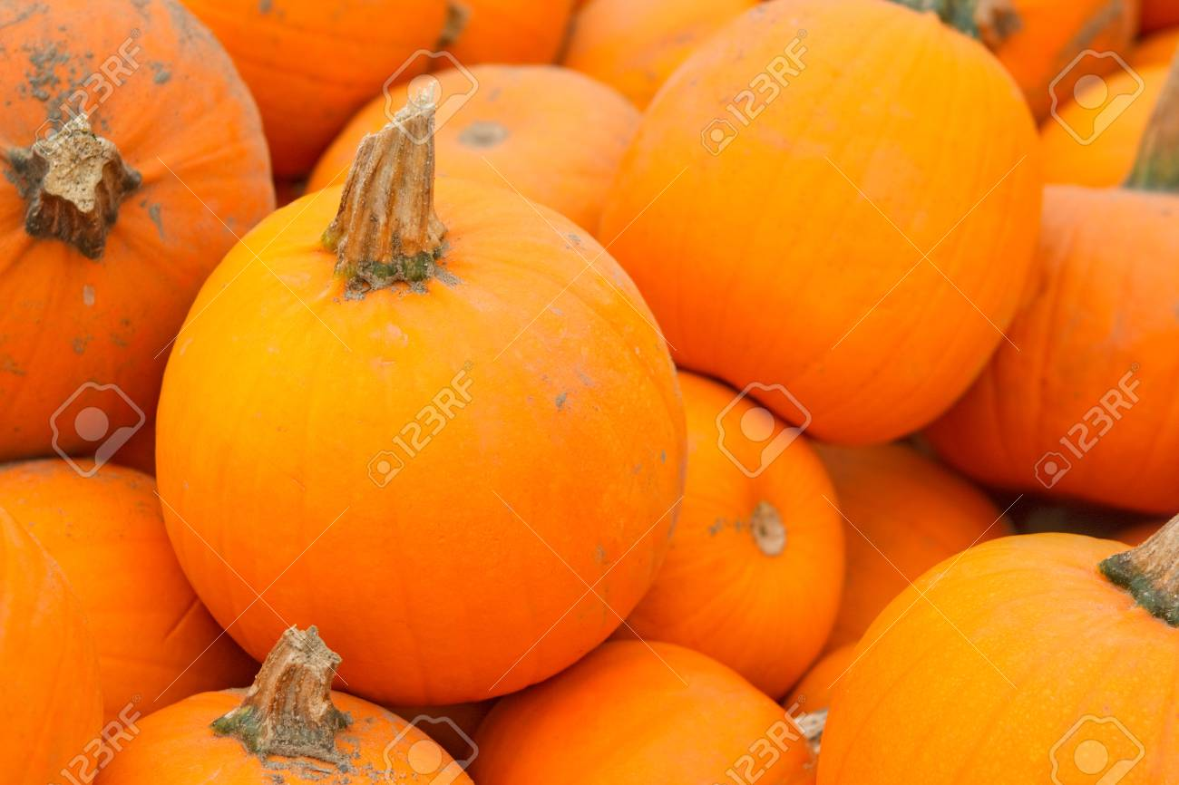 Fresh Harvest Heap Of Farm Pumpkins Halloween And Thanksgiving 1300x866