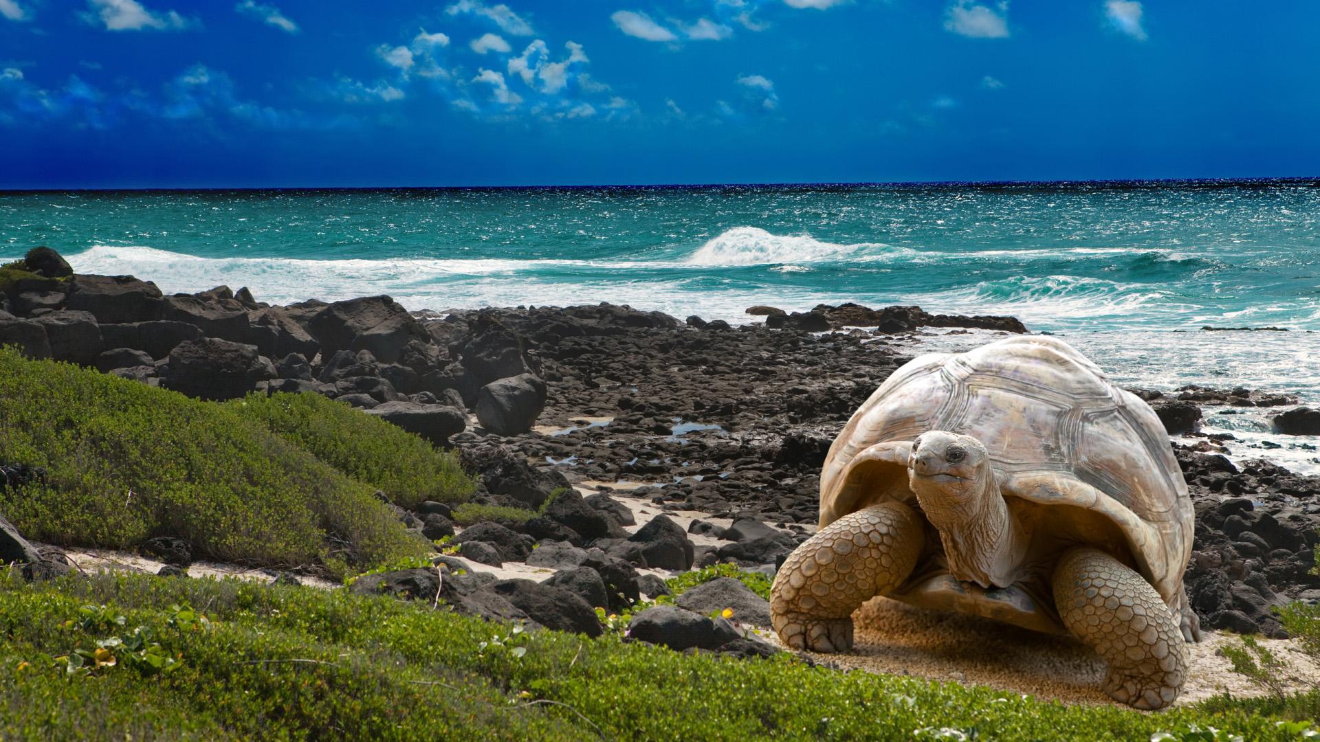 Turtle Beach Wallpapers Download Desktop Wallpaper Images 1920x1080