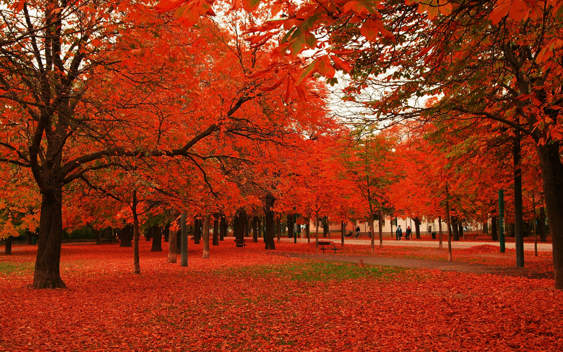 Download Red leaves autumn trees Wallpaper Wallpapers 1920x1200
