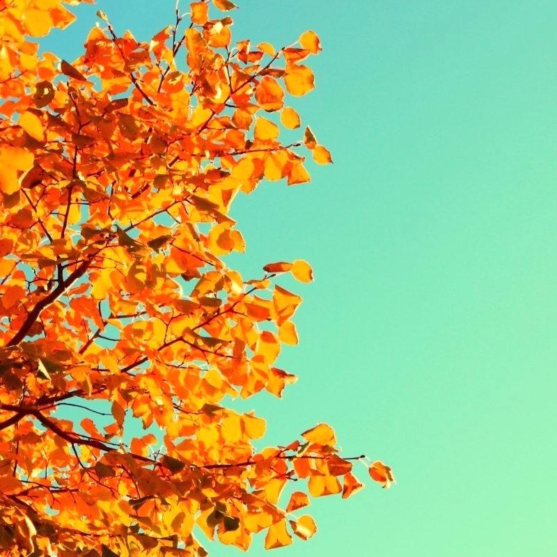 Phone Wallpapers Fall 2289505   HD Wallpaper Download 800x800