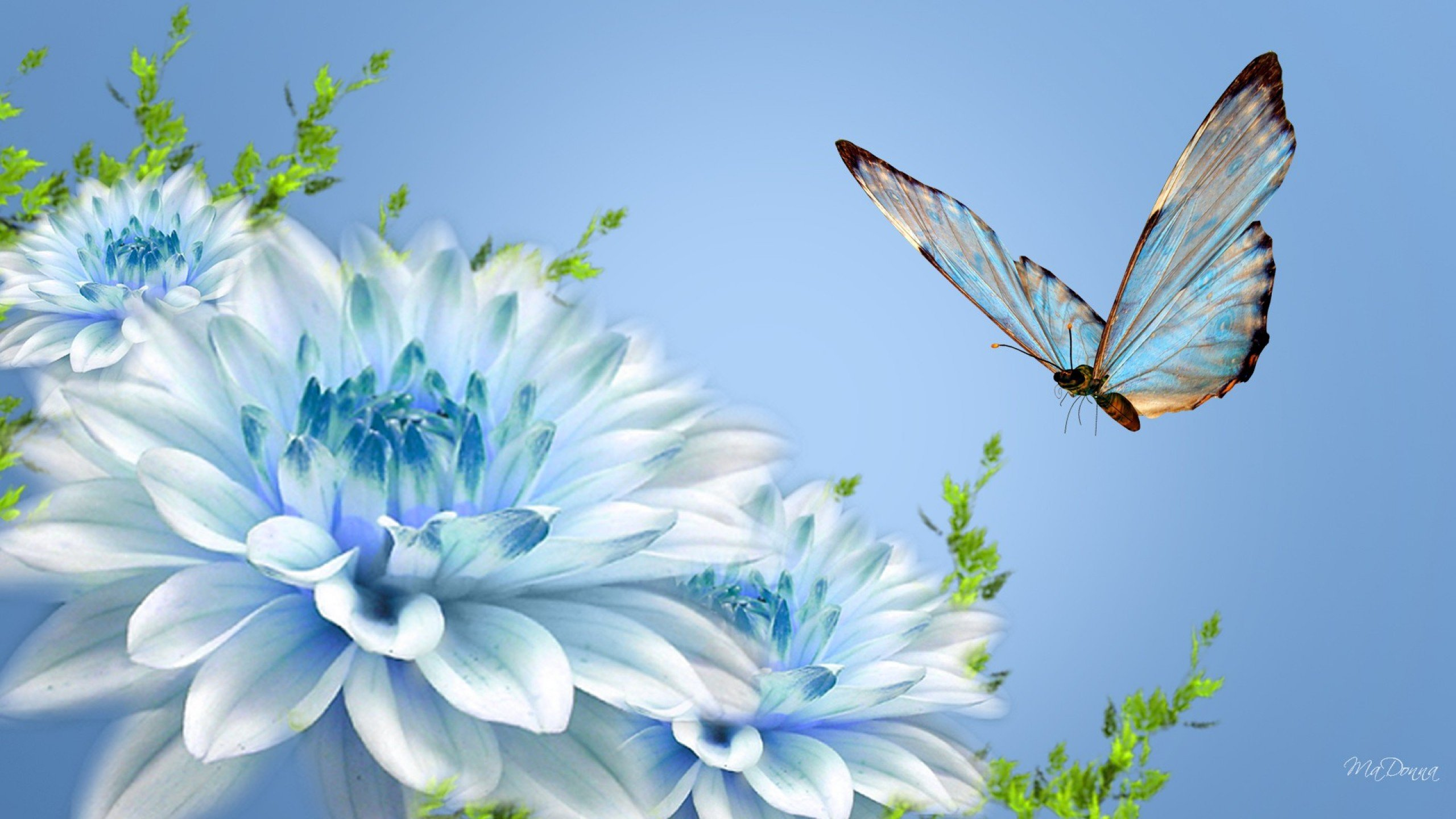 Butterfly and Light Blue Flowers Wallpaper   HD Background 2560x1440