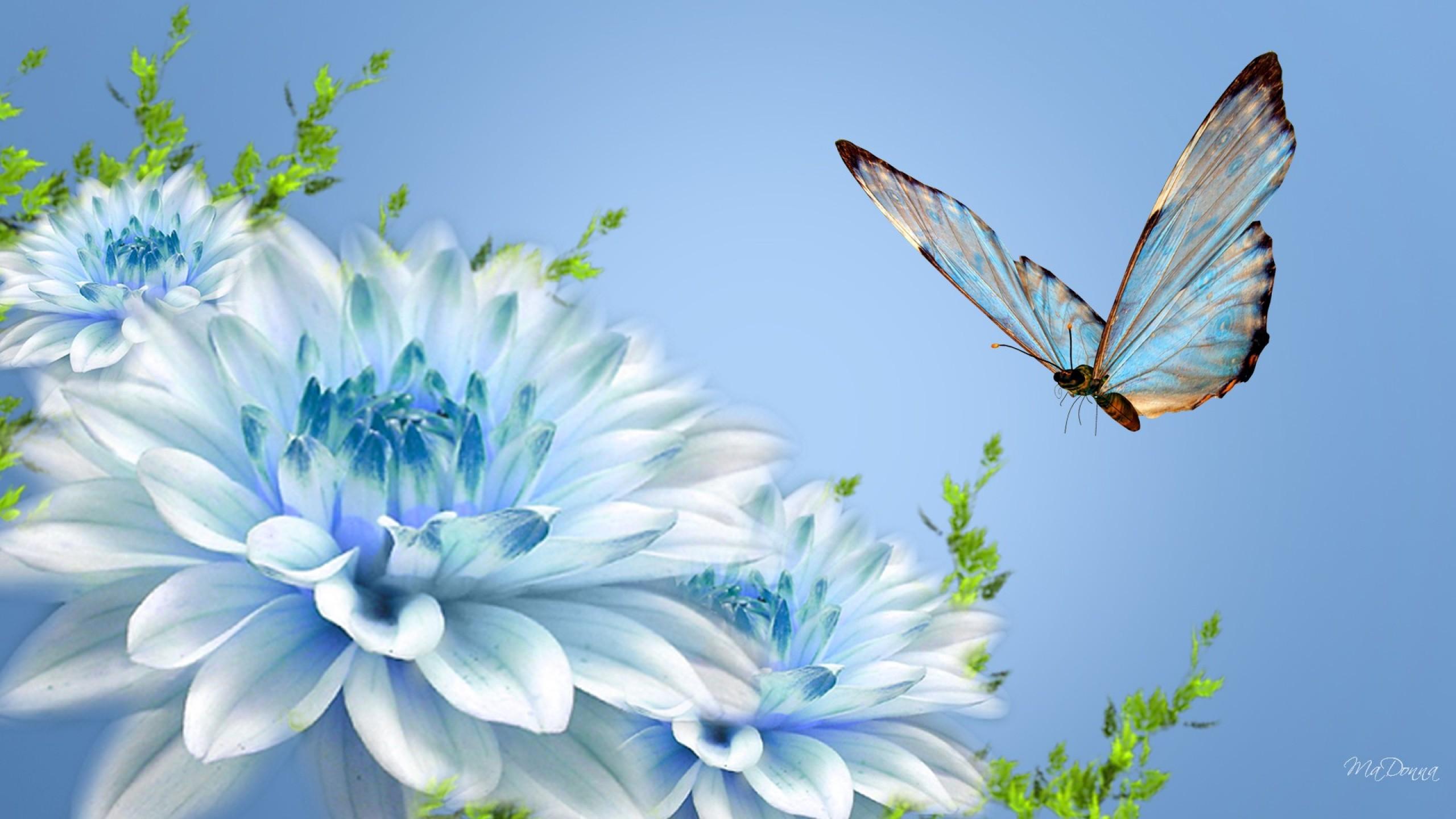 Разные бабочки  № 2033736  скачать