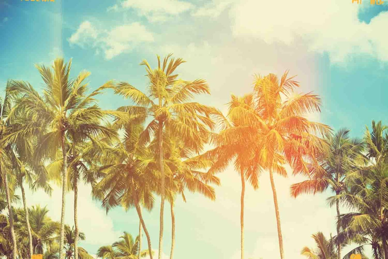 Wallpaper Palm Tree   Android Apps on Google Play 1350x900