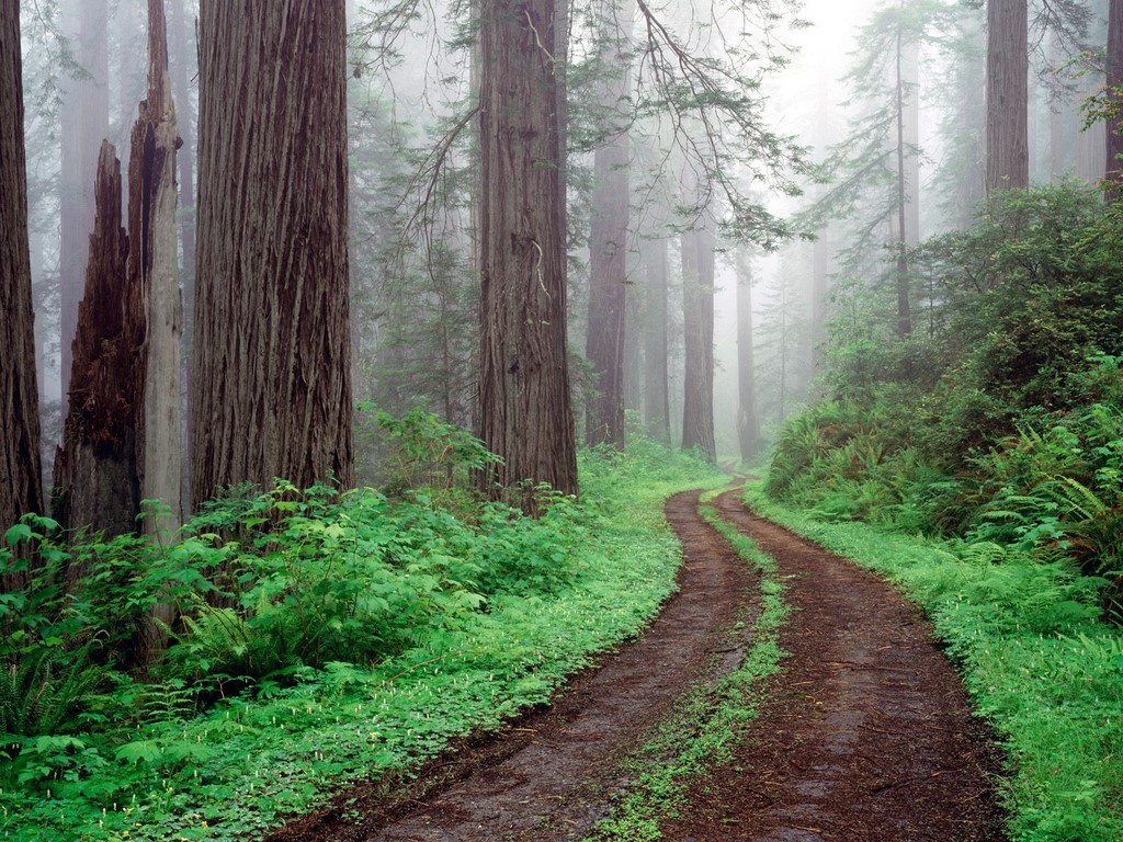 Best Nature Wallpaper Redwood National Park 701671 Nature 1024x768