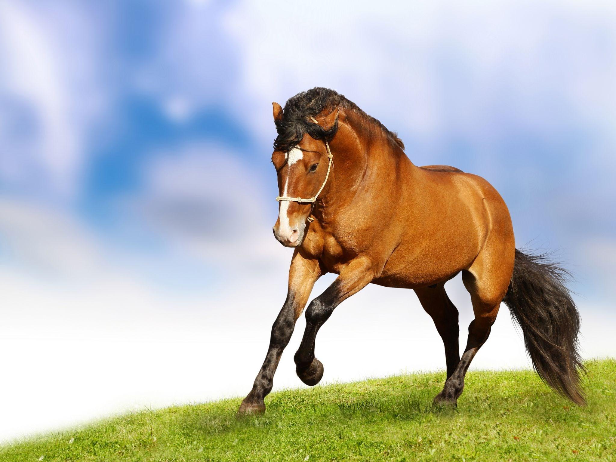 Horse desktop backgrounds 1080P 2K 4K 5K HD wallpapers 2048x1536