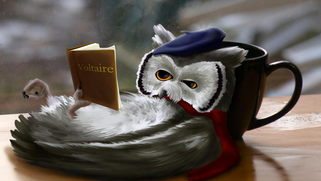 New Art Funny Wallpapers Jokes Funny Fantasy Reading Owl Wallpapers 1360x768