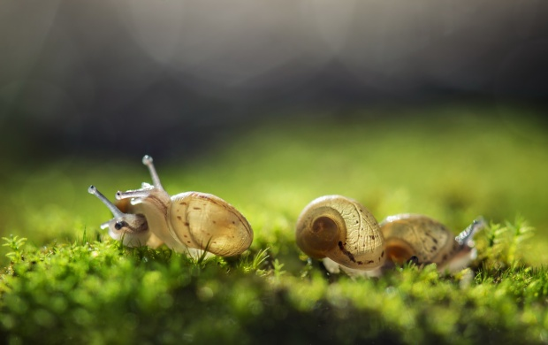 Cute Three Snail And Nature Background click to view 620x390