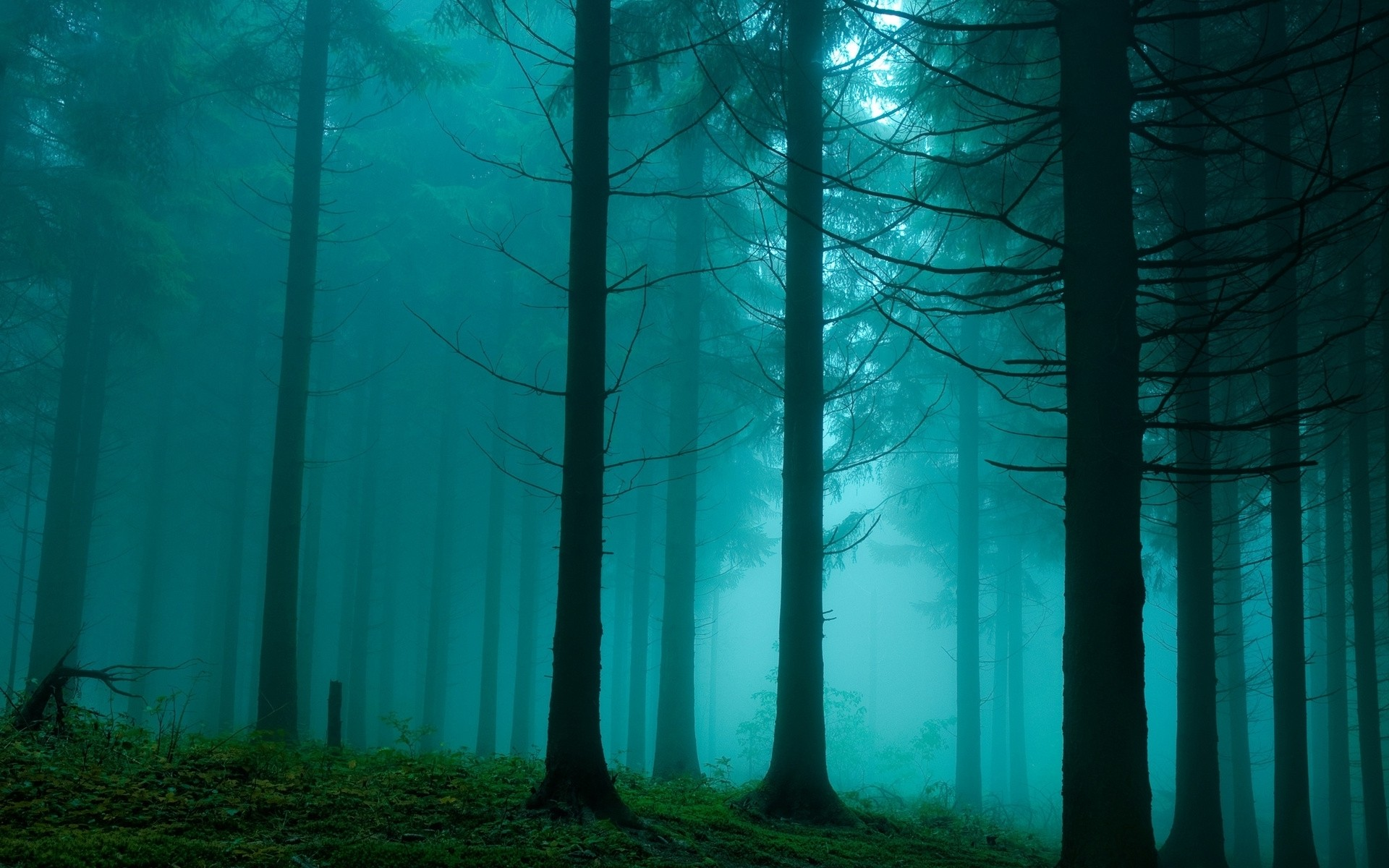 foggy forest wallpapers foggy forest stock photos foggy forest 1920x1200