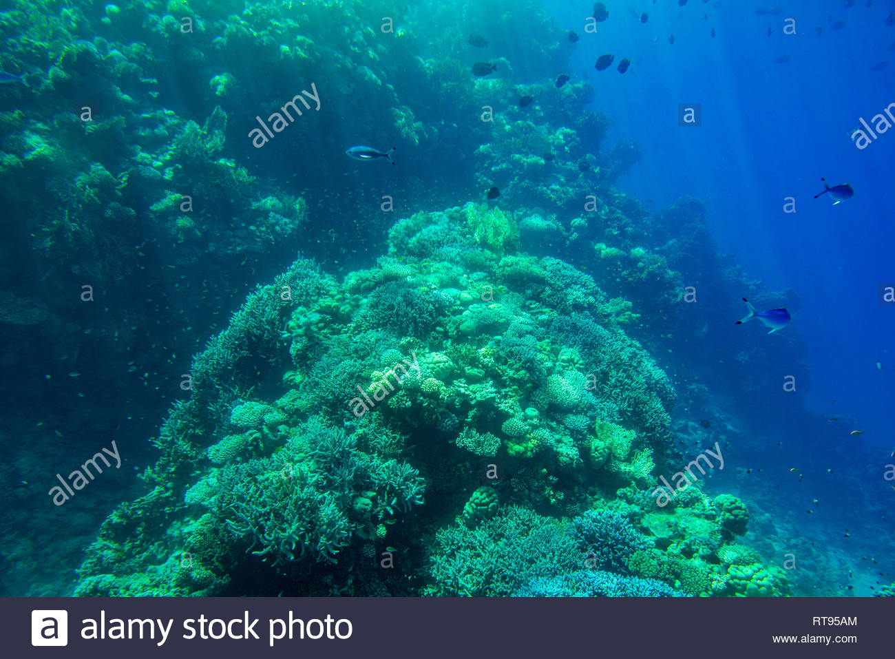 Aquatic Deep Blue Seabed Underwater Background Stock Photo 1300x957