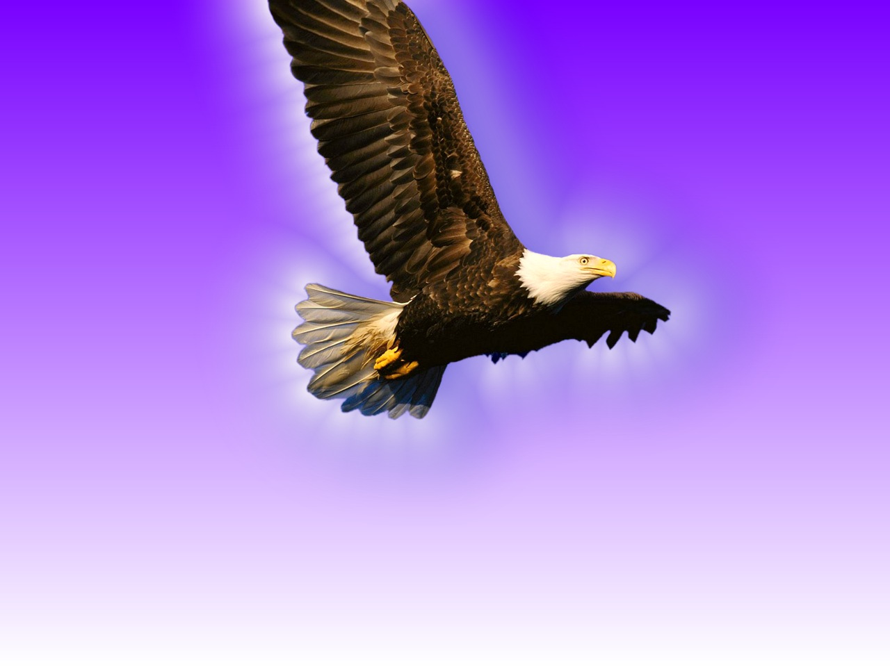 Flying Eagle Wallpaper 8350 Hd Wallpapers in Animals   Imagescicom 1280x960